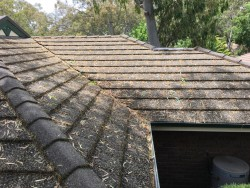 leaves-on-house-roof